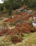 Alpes en automne avec de l'or et la bruyère brune Images libres de droits