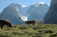 Alpes franceses, France Imagens de Stock Royalty Free