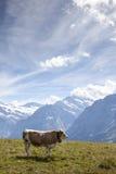 Alpes III Photo libre de droits