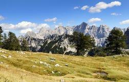 Alpes julianos Fotografia de Stock Royalty Free