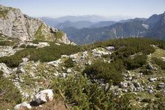 Alpes julianos - madeira do joelho foto de stock royalty free