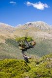 Alpes méridionaux Images libres de droits