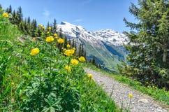 Alpes suíços Tulipas amarelas da montanha na perspectiva do fotos de stock