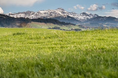 Alpes suisses photos libres de droits