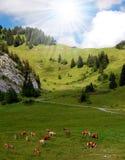 alpEuropa schweizare royaltyfria bilder