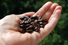 καφές φασολιών που ψήνετ&alpha Στοκ Φωτογραφίες
