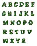 Alpha Arbor Stock Image