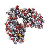 Alpha-cobratoxin molecule of Naja kaouthia cobra. Stock Images