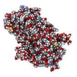 Alpha-galactosidase (Agalsidase) enzyme. Stock Image