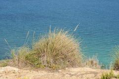 Alpha grass, Stipa tenacissima Stock Image