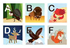 Alphabet. Animal alphabet including ant, bison, crab, deer, eagle and fox Royalty Free Stock Photo