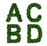 Alphabet. Bright vector natural alphabet from green leaves. Set. Letters a, b, c, d Royalty Free Stock Photo