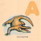 Alphabet anglais, alligator Photos libres de droits