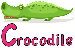 Alphabet animal C pour le crocodile Photos libres de droits