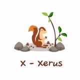 Alphabet animal d'isolement pour les enfants, X pour Xerus Images stock