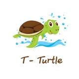 Alphabet animal d'isolement pour les enfants, T pour la tortue Image stock