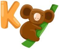 Alphabet animal K pour le koala Photographie stock