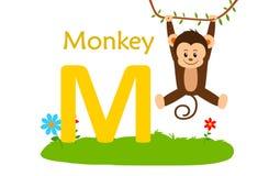 alphabet animal letter m M для обезьяны Стоковые Фотографии RF