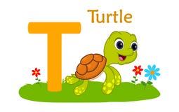 alphabet animal letter t tirtle的T 库存照片