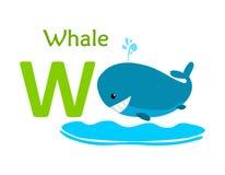 alphabet animal letter w W для кита Стоковые Фото