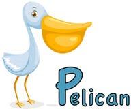 Alphabet animal P pour le pélican Image libre de droits