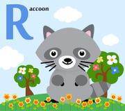 Alphabet animal pour les enfants : R pour le raton laveur Photo stock