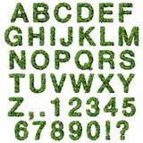 Alphabet avec des nombres faits à partir des feuilles de vert d'isolement sur le fond blanc 3d rendent Photographie stock