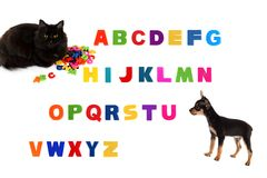 Alphabet, black cat, toy-terrier puppy  on white background Stock Image