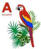 Alphabet for children. Cute  zoo alphabet with cartoon animals isolated on white A ara parrot Royalty Free Stock Image