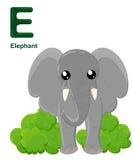 Alphabet for children. Cute  zoo alphabet with cartoon animals isolated on white E elephant Stock Photography