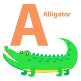 Alphabet for Children A letter Alligator Cartoon Stock Photos