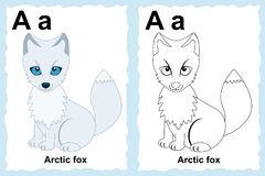 Alphabet coloring book page with outline clip art to color. Letter A. Arctic fox Royalty Free Stock Photography