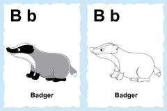 Alphabet coloring book page with outline clip art to color. Letter B. Badger. Vector animals. stock illustration