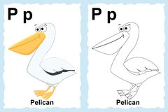 Alphabet coloring book page with outline clip art to color. Letter P. Pelican. Vector animals. vector illustration