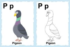 Alphabet coloring book page with outline clip art to color. Letter P. Pigeon.. Vector animals. vector illustration