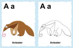 Alphabet coloring book page with outline clip art to color. Letter A. Anteater. Exotic animals Stock Photo
