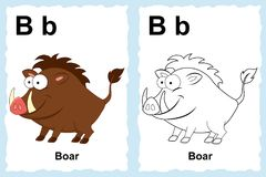Alphabet coloring book page with outline clip art to color. Letter B. Boar. Vector animals. stock illustration