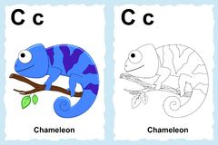Alphabet coloring book page with outline clip art to color. Letter C. Chameleon. royalty free illustration