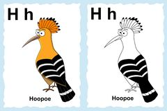 Alphabet coloring book page with outline clip art to color. Letter H. Hoopoe vector illustration