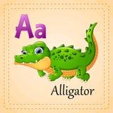 Alphabet d'animaux : A est pour l'alligator Images libres de droits