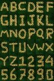 Alphabet de fleur illustration libre de droits
