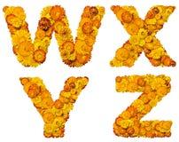 Alphabet des fleurs jaunes et oranges Image stock