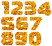 Alphabet des fleurs jaunes et oranges Photos libres de droits