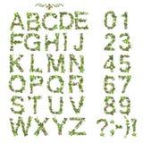 Alphabet et nombre d'été de ressort faits de fleur Photographie stock