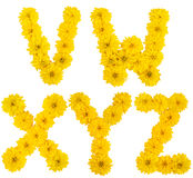 Alphabet floral. v, W, x, y, z Image stock
