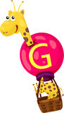 Alphabet  G for giraffe Royalty Free Stock Image