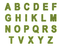 Alphabet of the grass. Isolated,white background stock photos