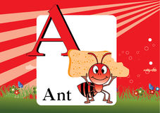 Alphabet-A. Illustration of  alphabet A with Ant Royalty Free Stock Photos