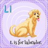 Alphabet L is for labrador Stock Photography
