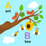 Alphabet Letter A-ant,B-bee,illustration. Alphabet Letter A-ant,B-bee,vector illustration Stock Photos